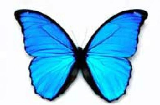 farfalla.630x360