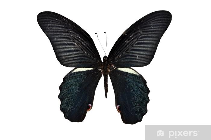 carte-da-parati-farfalle-nere-isolate.jpg